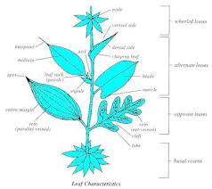Wildflower Identification