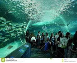 La tartaruga di mare nuota nellacquario vista da sopra fotografia