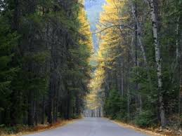 frost s road not taken poem interpretation business insider the road less traveled