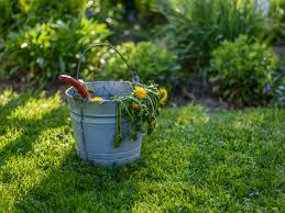 The recipes above work well but can hurt your grass (see my. Organic Weed Control For Lawns