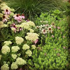 Vormcontrasten Bij Plantcombinaties Directplant