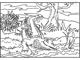 Kleurplaat Dieren Krokodil Kleurplaat Krokodil