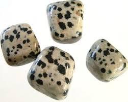Afbeeldingsresultaat voor dalmatian jasper