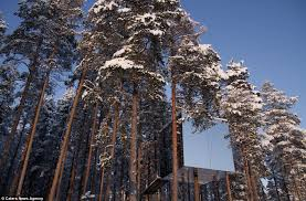 invisible tree house hotel. The Mirrored Sides Can Present Problems For Birds, But Four Are Clad In Invisible Tree House Hotel