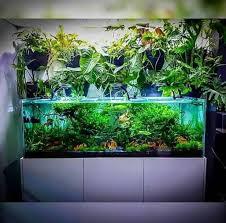 Amazing Aquarium Design Amazing Aquarium Design Ideas Indoor Decorations 21 Home