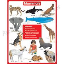 Mammals Chart Cd6390