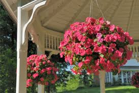 Best Hanging Baskets For Shade 1370342
