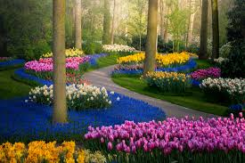 The world's most beautiful <b>tulip garden</b> is closed for 2020 – but ...