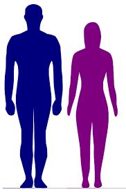身長と性別を入力すると複数の人の体型の差を並べて表示してくれる「Comparing Heights」 - GIGAZINE