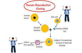 human cloning through islamic theology rebuffing the absence of  human cloning through islamic theology rebuffing the absence of god