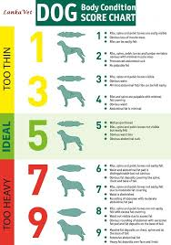 Dj Vet Line Body Condition Score Charts Of Dogs And Cats