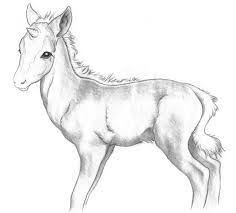 Small Picture 11 best Horse images on Pinterest Horse illustration Adult