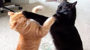 Cat fight fight fist who woman