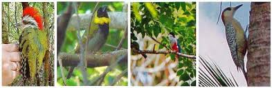 Image result for bird watching in cuba