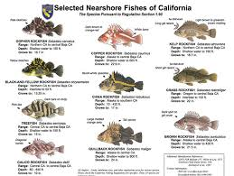 California Rockfish Chart New Groundfish Regulations For Ca California Ocean Fishing