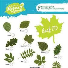 Tree Identification Chart Tree Identification