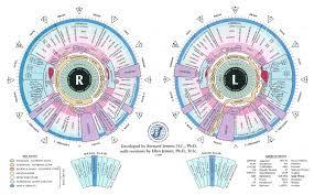 What Is Iridology Chart Iridology Peek Purity