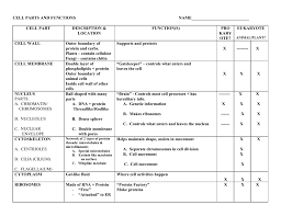 Cell Organelle Chart Cell Organelle Table