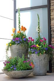 Beautiful spring container planting in urns