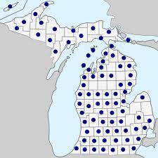 Silene latifolia - Michigan Flora