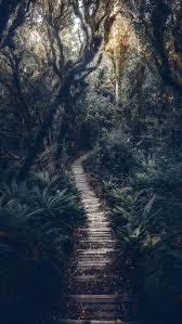 Jungle path in NZ phone wallpaper