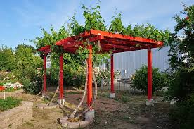 How To Build Grape Arbors Using This Practical Design And Growing Grape  Arbors