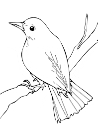 Small Picture Nightingale coloring page Animals Town animals color sheet