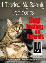 best enough is enough images animal cruelty  stop animal testing ughhh i only buy cruelty beauty products how can anyone not care enough to stop