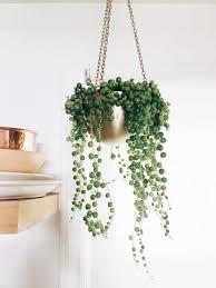 Best 25 Indoor Hanging Plants Ideas On Pinterest Hanging Plants Hanging  Plants Indoor