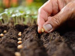 Can You Plant Fresh Seeds: Harvesting And Planting Seeds Same Season