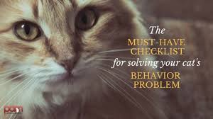 Cat Behaviorist Solving Your Cats Behavior Problem