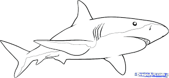 Great White Shark Outline Drawing At Paintingvalley Com