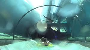 underwater water slide. Modren Slide To Underwater Water Slide