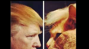 Résultats de recherche d'images pour «#TrumpYourCat.»