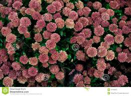Flower Wall Flower Wall Royalty Free Stock Photo Image 12159525