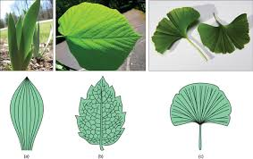 Leaves Boundless Biology
