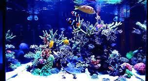 led aquarium lighting guide reef aquarium lighting guide r setup marine led led aquarium lighting guide led aquarium lighting guide