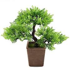 Bamboo Plant Image Unavailable Thriving Spaces Amazoncom Gtidea 106 Inch Artificial Cedar Bonsai Trees Fake