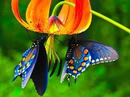 Image result for images butterfly on flower