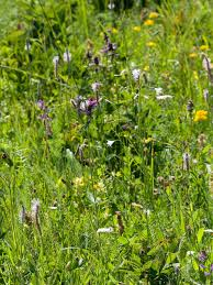 Grasslands More Diverse Than Rain Forests—In Small Areas