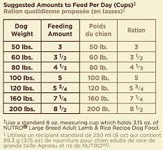 Amazon Com Nutro Natural Choice Large Breed Adult Dog Food