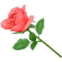 La rose à 10 - Page 5 Images?q=tbn:ANd9GcTjbCMGBpxpVKnDZ_HjlIjO0G0CuOslkpaG3yRZ5QTG4vBPxA5KvA