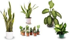 Veja mais ideias sobre jardinagem, jardins pequenos, jardinagem e paisagismo. Plantas Para Serem Usadas Com Sabedoria De Acordo Com O Feng Shui Mais Feng Shui