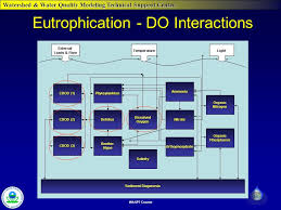 2 watershed water quality modeling technical support center wasp7 course eutrophication do interactions