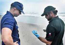 Marine Science Technician Tar Dead Turtle Found On The Beach In Port Aransas Port