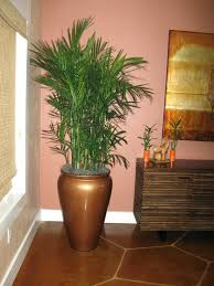 Indoor Trees Safe For Cats Articles With Best Tall Indoor Plants .