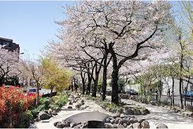 播磨坂さくら並木 -東京お花見特集- -とうきょうなび-