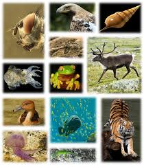 bio diversity essay importance of biodiversity essay order essay  global biodiversity essay on biodiversity