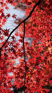 6098013 / 1080x1920 leaves, red, trees ...