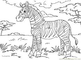 Small Picture Amazing Zebra Coloring Page Best Coloring KIDS 2946 Unknown